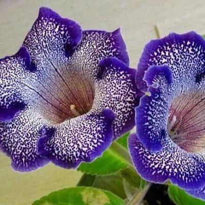 Дачный сезон! НЕ ПРОПУСТИ! Более 2000 видов семян!   — Семена комнатных растений — Семена многолетние