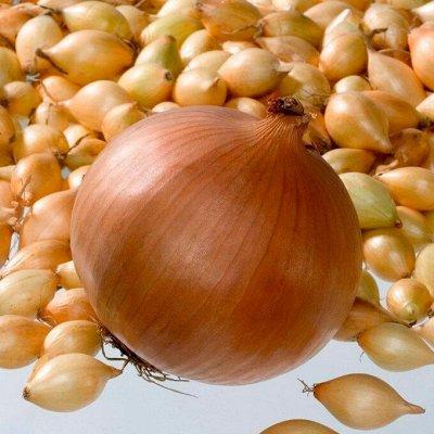 Мудрый дачник🌱 Акция! Лук севок от 69 рублей! Голландия  — Лук Севок Коррадо. Голландия — Семена овощей