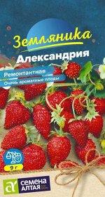 Ягода Александрия земляника ремонтантная/Сем Алт/цп 0,05 гр.