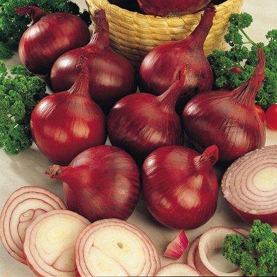Мудрый дачник🌱 Лук севок Голландия. Семена. Удобрения🤩 — Лук Севок Ред Кармен. Голландия — Семена овощей