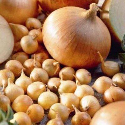 Мудрый дачник🌱 Лук севок Голландия. Семена. Удобрения🤩 — Лук Севок Румба. Голландия — Семена овощей