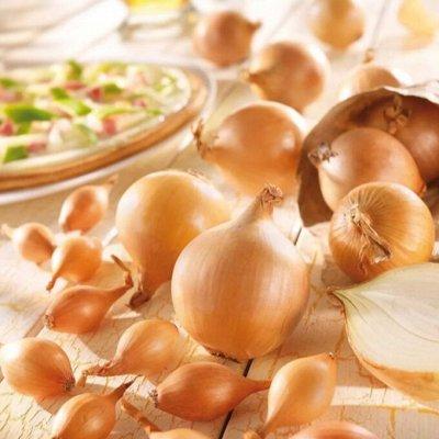 Мудрый дачник🌱 Лук севок Голландия. Семена. Удобрения🤩 — Лук Севок Стурон. Голландия — Семена овощей