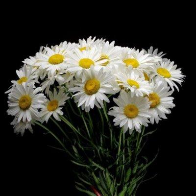 Искусственные Цветы на Пасху 2 мая Родительский День 11 мая — Букеты размер от 34 см до 37 см (6-25 голов) — Искусственные растения