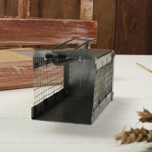 Мышеловка-ловушка (клетка), 13 ? 6 ? 6 см, металл