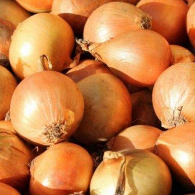 Мудрый дачник🌱 Лук севок Голландия. Семена. Удобрения🤩 — Лук Севок Купидо удлиненный. Голландия — Семена овощей