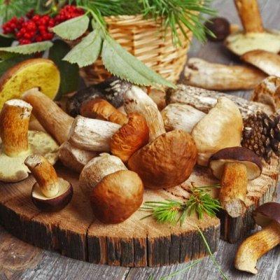 Экспресс! Мудрый дачник! Лук - Севок в наличии!✔ — Мицелий грибов — Мицелии грибов