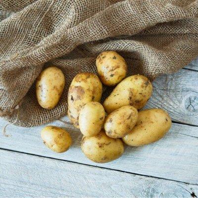 Натуральные фермерские продукты от Приморского производителя — Фермерские овощи и зелень. — Овощи