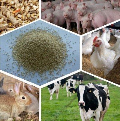 Мудрый дачник🌱 Акция! Лук севок от 69 рублей! Голландия  — Кормовые добавки для животных — Для сельскохозяйственных животных