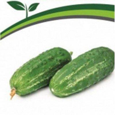 Семена Партнер и Семко. Пристрой. Овощи, зелень, лук, цветы — Огурчики — Семена овощей