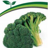 Семена Партнер и Семко. Пристрой. Овощи, зелень, лук, цветы — Капуста — Семена овощей