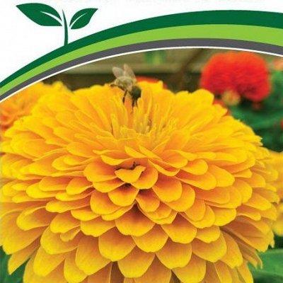 Семена Партнер и Семко. Пристрой. Овощи, зелень, лук, цветы — Семена цветов — Семена цветов