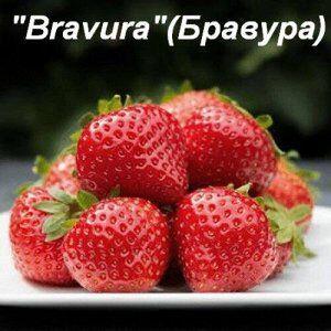 Bravura Рекомендую!!! Показывает отличный результат
