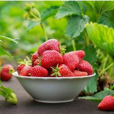 Универсальные удобрения,для клубники,цветов,хвои,плодовых