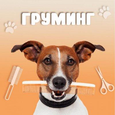 KARMY / ZооRING / ЛАКОМСТВА - 🐶 Счастливая жизнь питомца — Всё для груминга — Уход