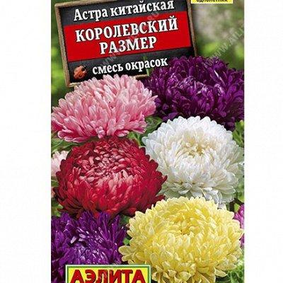 Семена АЭЛИТА: огромный выбор семян. В наличии!  — Астры — Семена цветов