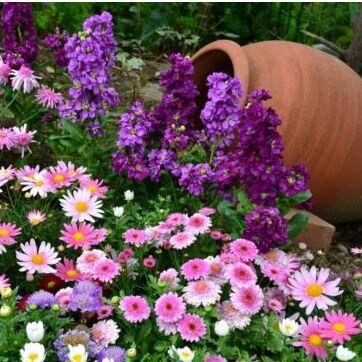 Цветочная — много новинок😍 — Садовые растения