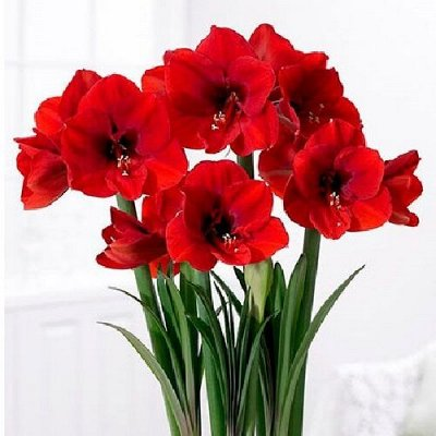 Цветочная - много новинок😍    — комнатные растения — Декоративноцветущие