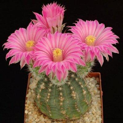 Цветочная — много новинок😍 — Суккуленты и кактусы
