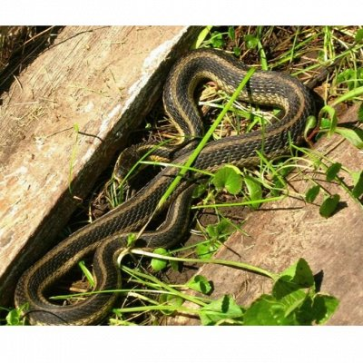 🆘 Травим тараканов, комаров, блох, садовых вредителей и др — Средство от змей — Защита от вредителей