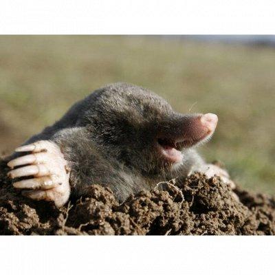 🆘 Травим тараканов, комаров, блох, садовых вредителей и др — Кротоловки — Защита от вредителей