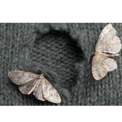 🆘 Травим тараканов, комаров, блох, садовых вредителей и др — Средства от моли — Средства от тараканов, клопов, грызунов и насекомых