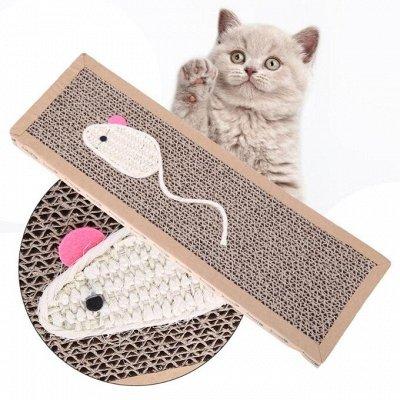 KARMY / ZооRING / ЛАКОМСТВА - 🐶 Счастливая жизнь питомца — Когтеточки для кошек — Когтеточки