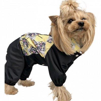 Кот&Пес- товары для усатых и лохматых    — Одежда для собак. Весенние новинки — Аксессуары и одежда