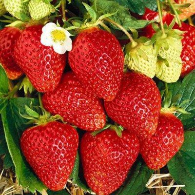 Экспресс! Мудрый дачник! Лук - Севок в наличии!✔ — Семена фруктов и ягод — Семена фруктов
