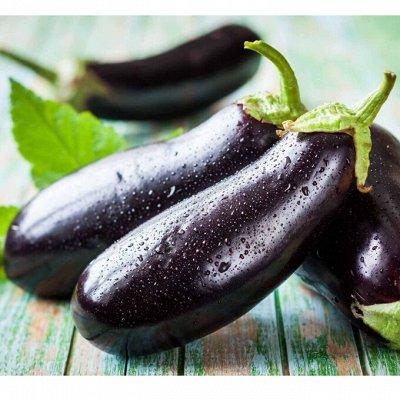 Новинки 2021! Невероятные. Урожайные. Алтайские. — Баклажан — Семена овощей