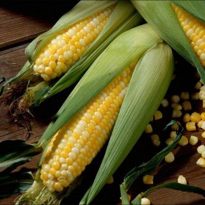 Новинки 2021! Невероятные. Урожайные. Алтайские. — Кукуруза — Семена овощей