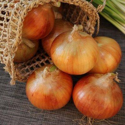 Новинки 2021! Невероятные. Урожайные. Алтайские. — Лук — Семена овощей