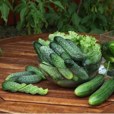 Новинки 2021! Невероятные. Урожайные. Алтайские. — Огурец — Семена овощей