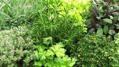 Все для сада и огорода Семена: Цветы Овощи Цены от 10 руб  — Семена пряных культур и трав. — Семена зелени и пряных трав