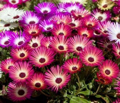 Семена: Цветы Овощи Цены от 6 руб — ❤ Семена цветов. Однолетники — Семена однолетние