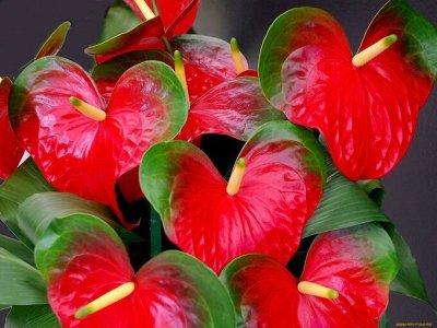 Семена: Цветы Овощи Цены от 6 руб — ❤ Семена цветов. Двулетники, многолетники, комнатные — Семена цветов