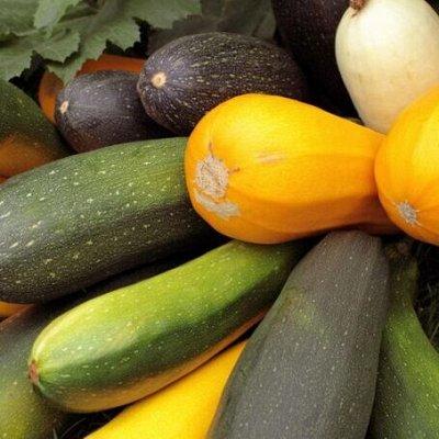 Семена: Цветы Овощи Цены от 6 руб — ❤ Семена овощных культур. Кабачок — Семена овощей