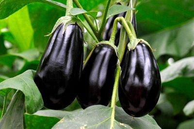 Семена: Цветы Овощи Цены от 6 руб — ❤ Семена овощных культур. Баклажан — Семена овощей