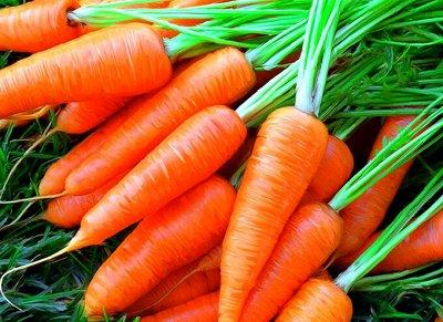 Семена: Цветы Овощи Цены от 6 руб — ❤ Семена овощных культур. Морковь — Семена овощей
