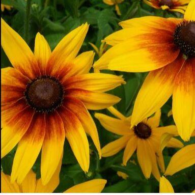Все для сада и огорода Семена: Цветы Овощи Цены от 10 руб  — Семена цветов. Многолетники — Семена многолетние