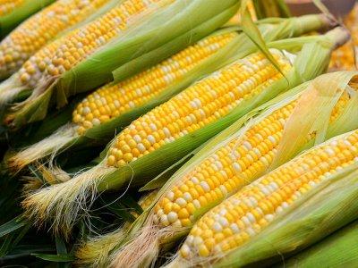 Семена: Цветы Овощи Цены от 6 руб — ❤ Семена овощных культур. Кукуруза — Семена овощей