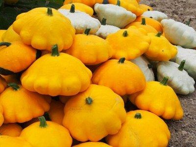Семена: Цветы Овощи Цены от 6 руб — ❤ Семена овощных культур. Патиссон — Семена овощей