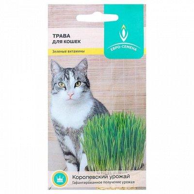 Пижон — для собак и кошек — Семена газонных трав и сидератов