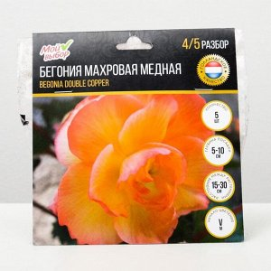 """Бегония махровая """"Медная"""" р-р 4/5, 5 шт"""