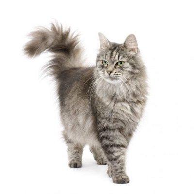 Догхаус. Быстрая закупка зоотоваров. Всегда есть акции!  — Груминг и аксессуары для кошек — Уход