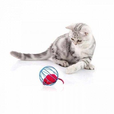 Догхаус. Быстрая закупка зоотоваров. Всегда есть акции!  — Игрушки для кошек — Игрушки