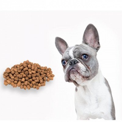 🐶 Догхаус. Быстрая закупка зоотоваров. Всегда есть акции — Сухие корма для собак — Корма