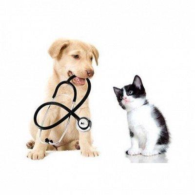 🐶 Догхаус. Быстрая закупка зоотоваров. Всегда есть акции!  — Ветеринарные препараты — Для животных
