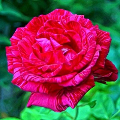 Весенняя посадка: Вишня, Барбарис и Облепиха 🍒 — Розы — Декоративноцветущие