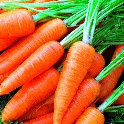 Большая распродажа саженцев и садовой химии! Все в наличии — Семена Морковь, Свекла