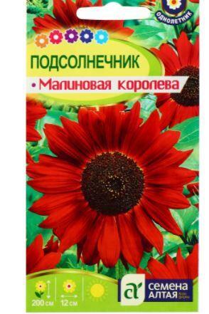 """Семена цветов Подсолнечник """"Малиновая Королева"""""""